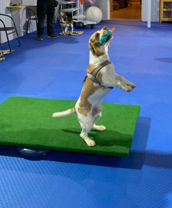 Hundeschule Beatus Canis Austria
